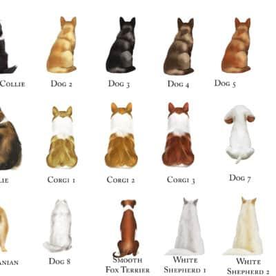 Dog Choices